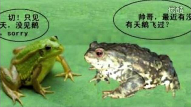 青蛙和癞蛤蟆